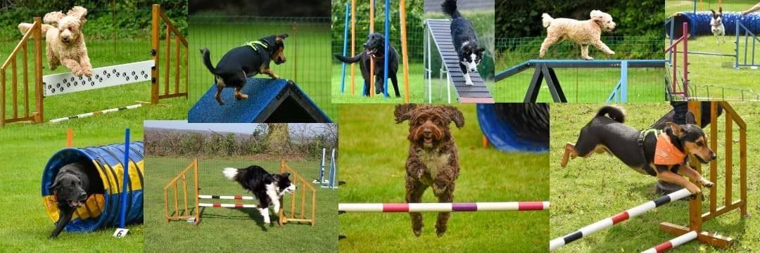 Aguility-barn og hund / sykkel ved Sport 1.